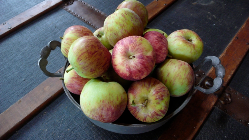 Fall #apples from my tree
