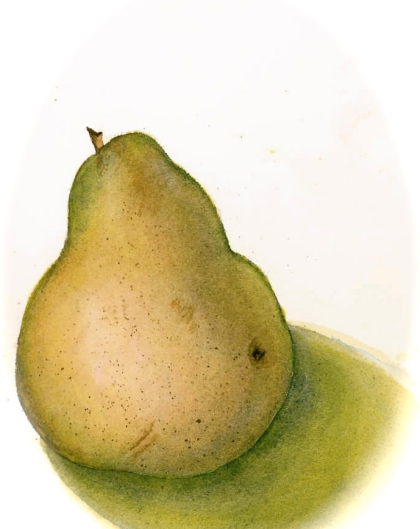 pear watercolour, slim paley
