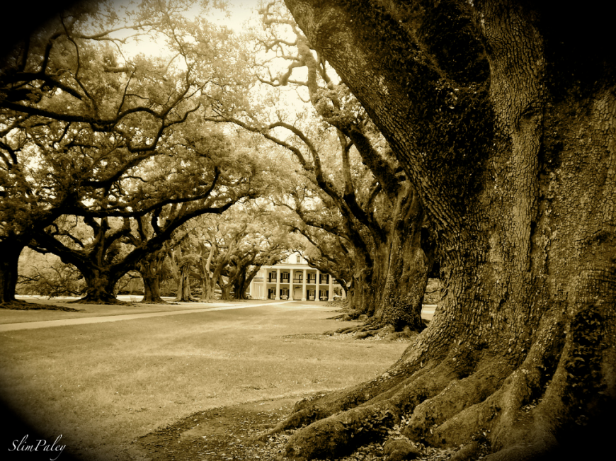 Oak Alley, Louisiana, Slim Paley